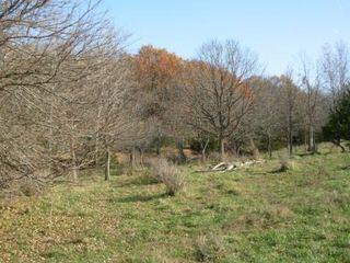 Farmland 4
