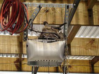 Nest_opener
