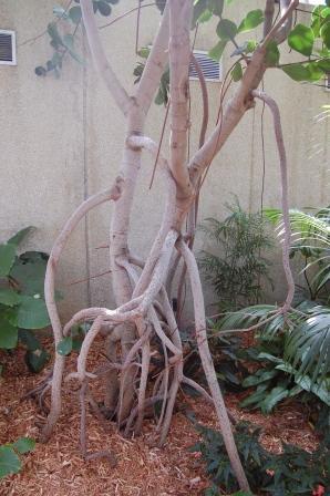Botanical_center_2