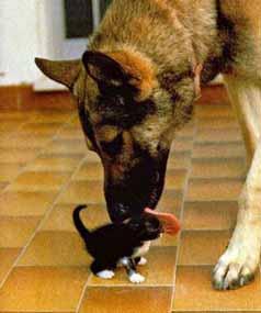 Dog_cat_pet