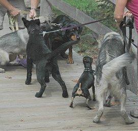 Dogfightsigns2