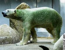 Green_bear_ap